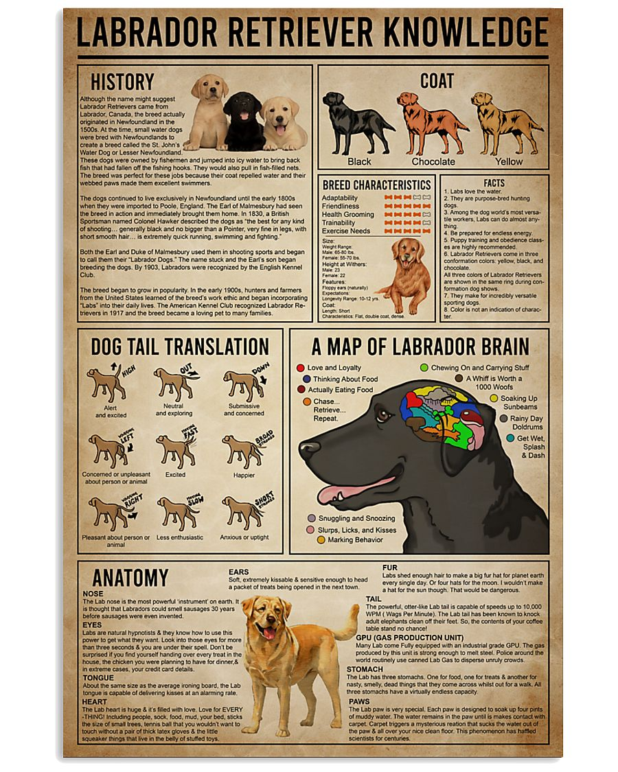 poster labrador retriever know 24x36 Poster