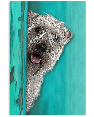 Soft Coated Wheaten Terrier Gorgeous