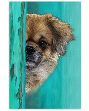 Tibetan Spaniel Gorgeous Poster 1701 11x17 Poster front
