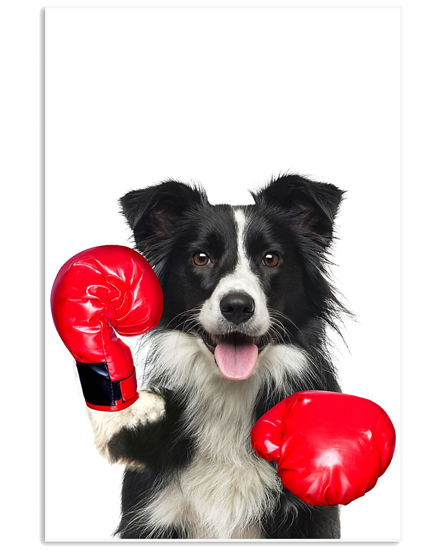 Border Collie Boxing Poster 1812  11x17 Poster