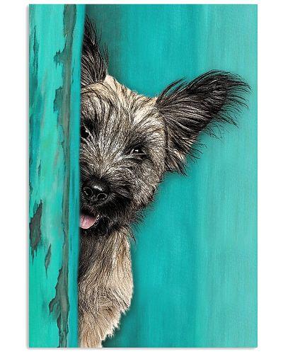Skye Terrier Gorgeous