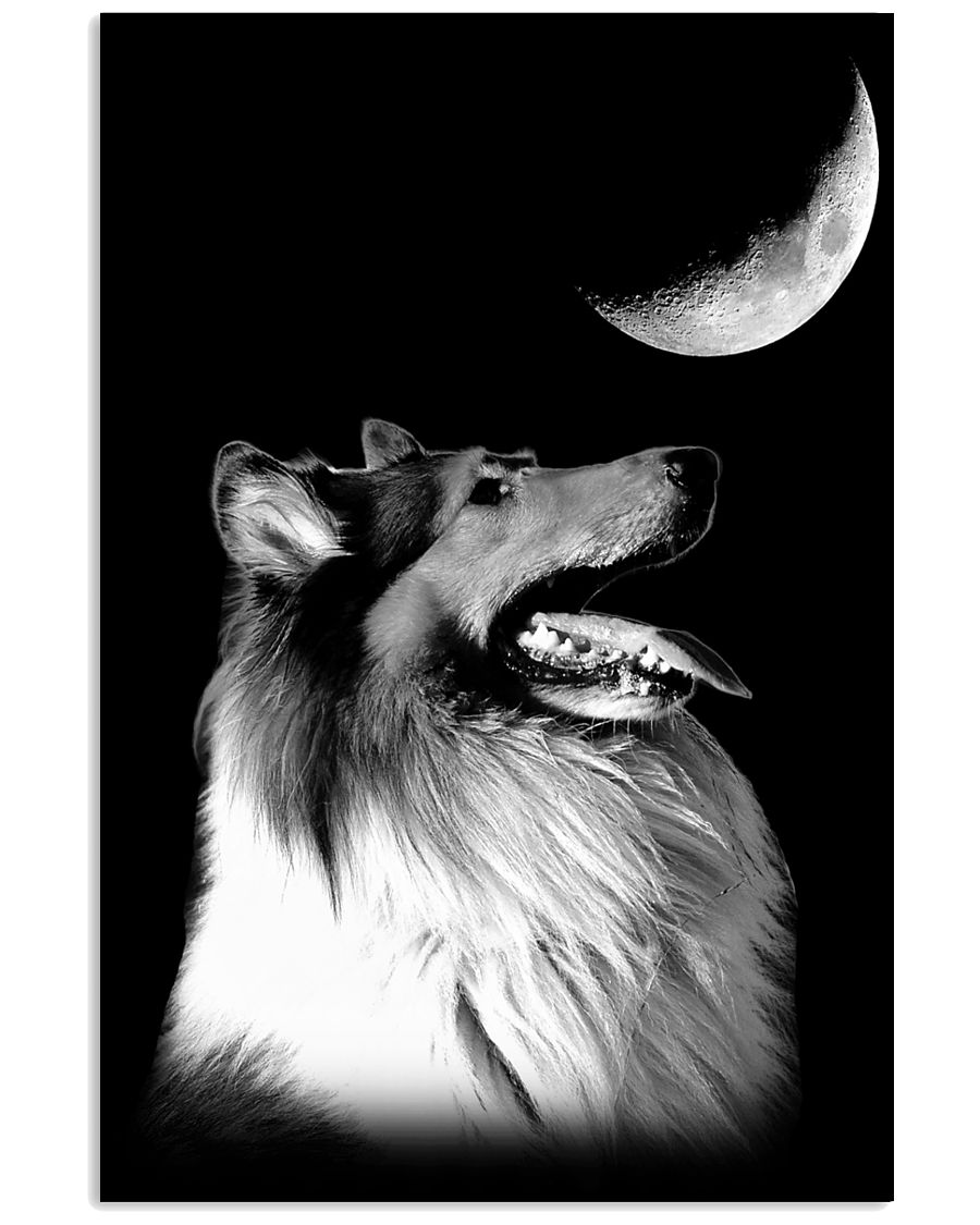 Collie Look Moon 11x17 Poster
