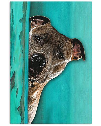 Staffordshire Bull Terrier Gorgeous