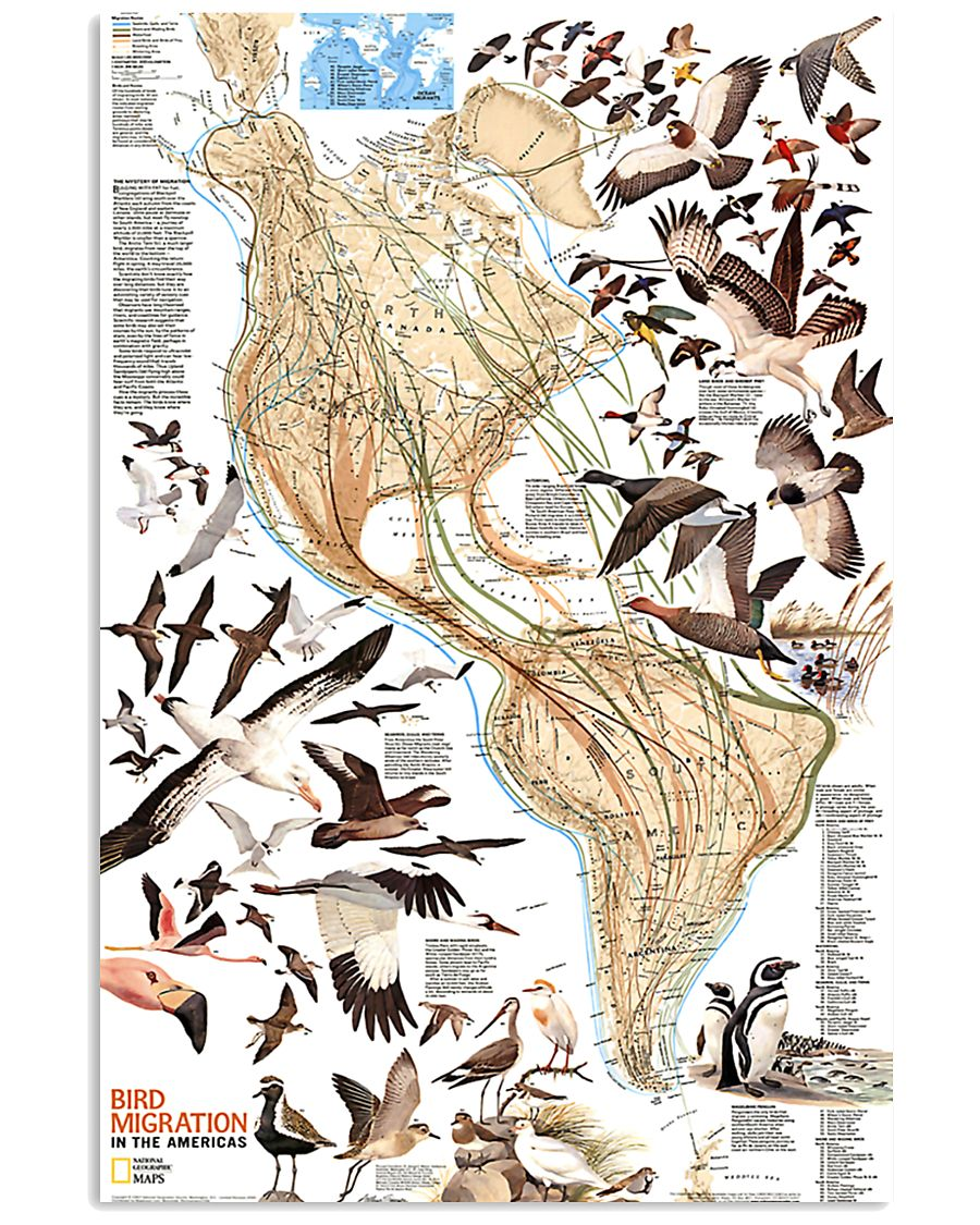 Bird Migration In The Americas 11x17 Poster