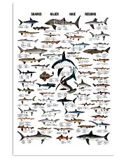 Shark Species By Size 11x17 Poster front