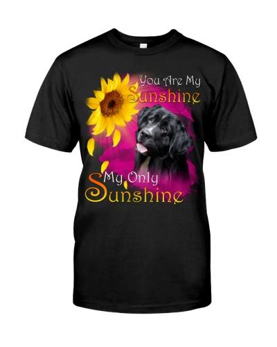 Newfoundland-02-My Sunshine