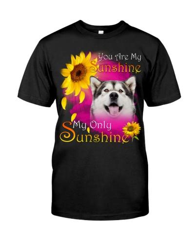 Alaskan Malamute-Face-My Sunshine