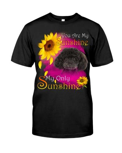 Poodle-Face-My Sunshine