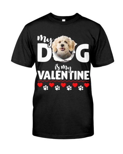 Poodle Crossbreed-My Valentine