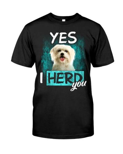Maltese-I Herd You