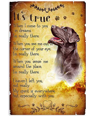 Labrador - True