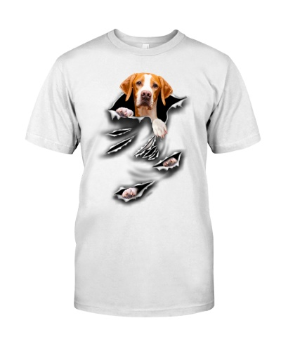 English Pointer - Torn04