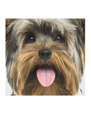 Yorkshire Terrier-Face Mask Cloth face mask aos-face-mask-coverlet-lifestyle-front-02