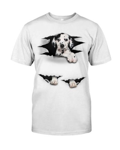 Dalmatian - Torn03