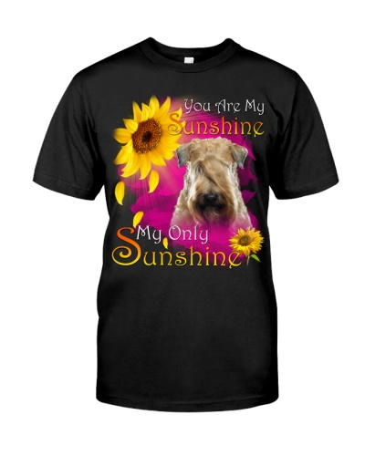 Soft Coated Wheaten Terrier-Face-My Sunshine