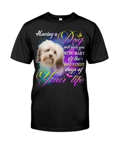 Havanese-02-Bless You