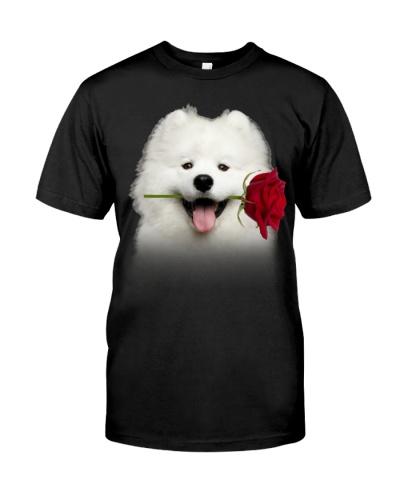 Samoyed-Rose