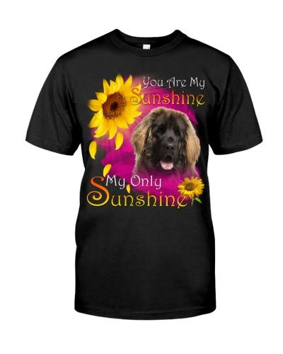 Leonberger-Face-My Sunshine