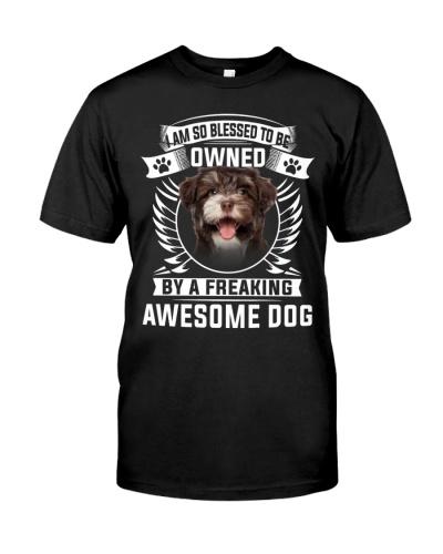 Havanese-Awesome Dog