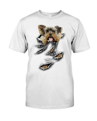 Yorkshire Terrier - Torn04