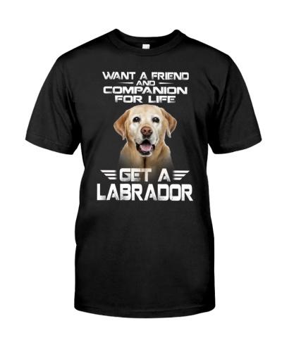 Labrador - Friend