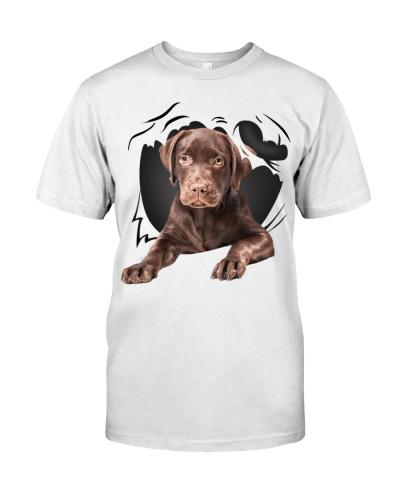 Labrador-Chocolate-Torn07