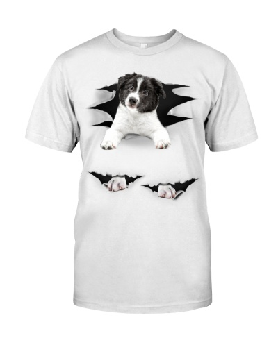 Border Collie - Torn03