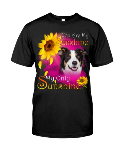 Border Collie-Face-My Sunshine