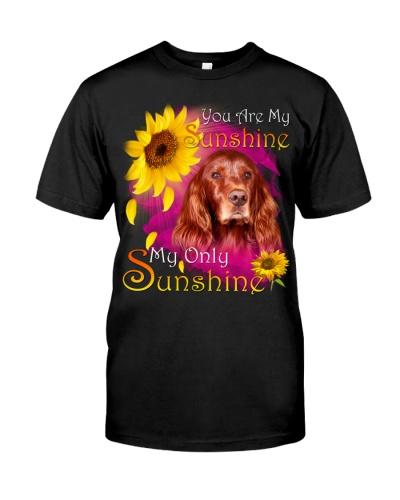 Irish Setter-Face-My Sunshine