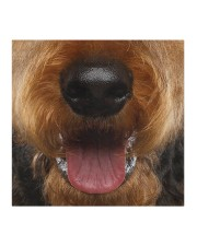 Airedale Terrier-Mask Mouth Cloth face mask aos-face-mask-coverlet-lifestyle-front-02