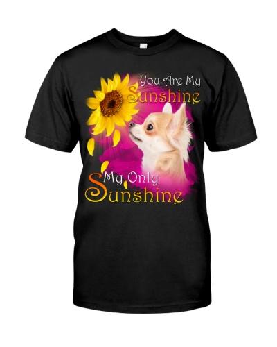 Chihuahua-My Sunshine