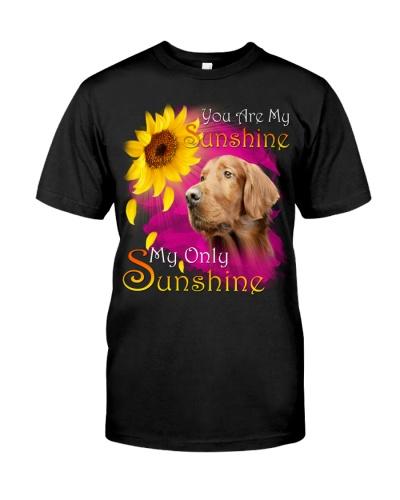 Irish Setter-02-My Sunshine