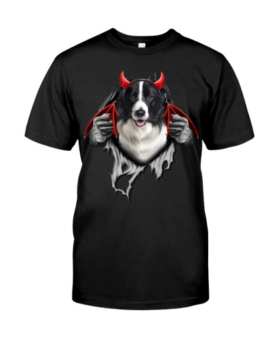Border Collie - Torn06