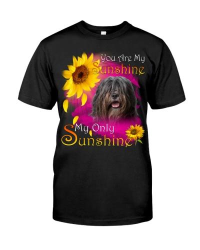 Bearded Collie-Face-My Sunshine