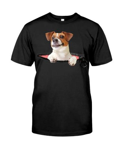 Jack Russell Terrier-Zip