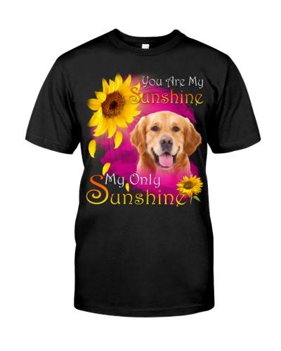 Golden Retriever-Face-My Sunshine