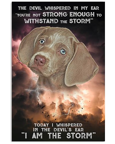 Weimaraner - Storm