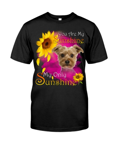 Yorkshire Terrier-Face-My Sunshine