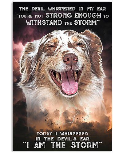 Australian Shepherd - Storm