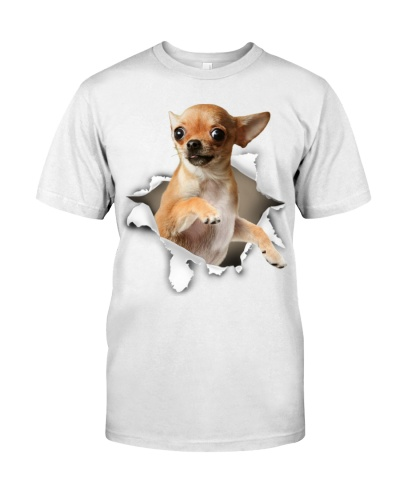 Chihuahua - Torn02