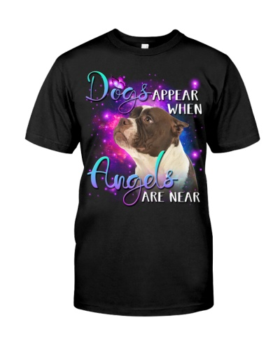 American Bulldog-02-Angels Are Near
