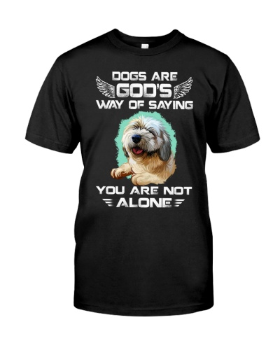 Lhasa apso-Not Alone