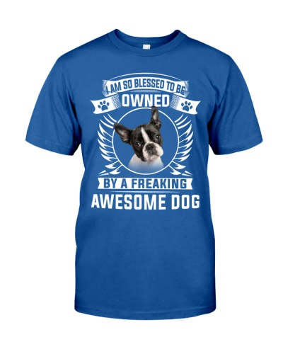 Boston Terrier-Awesome Dog
