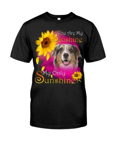 Australian Shepherd-Face-My Sunshine