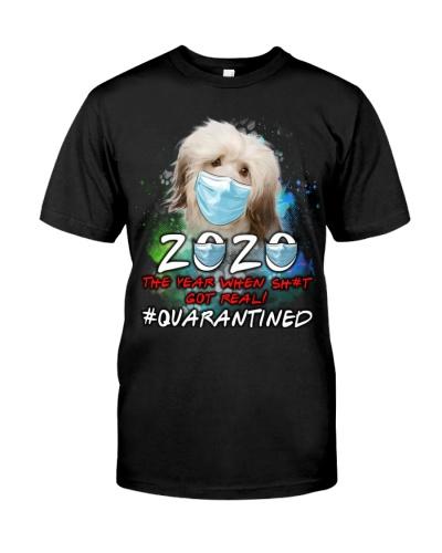 Havanese-02-Quarantined