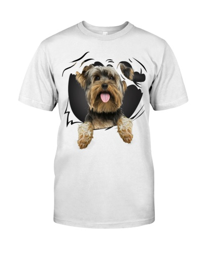Yorkshire Terrier-Torn07