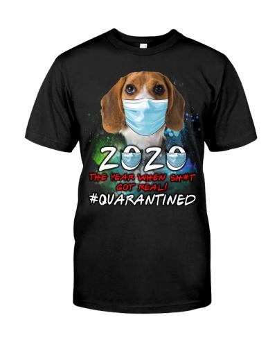 Beagle-Quarantined