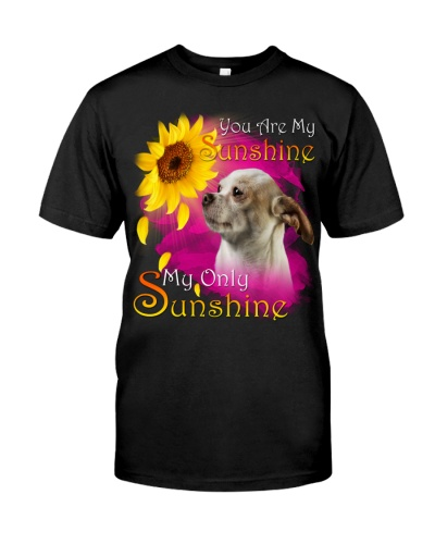 Chihuahua-02-My Sunshine
