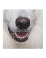 Berger Blanc Suisse-Mask Mouth Cloth face mask aos-face-mask-coverlet-lifestyle-front-02