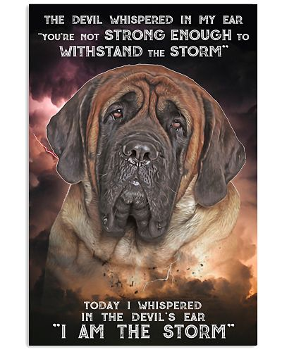 English Mastiff - Storm
